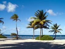 Blaues Wasser-schöne Palmen Stockfotos