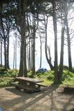 Blaues Zelt unter Baumabdeckung am Strand Lizenzfreie Stockfotografie