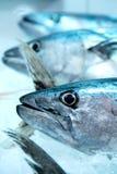 Blaufisch Stockbilder