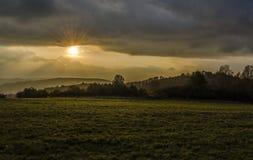 Blaufuss, Krahule - Zdjęcie Stock