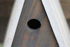 Blaumeisevogelhaus Stockfoto