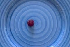 Blauplatte der roten Himbeere Lizenzfreies Stockfoto