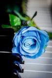 Blaurose auf einem Klavier Lizenzfreie Stockfotografie