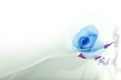 Blaurose auf Seide Stockfotos