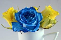 Blaurose und Blumen der gelben Rosen Lizenzfreies Stockfoto