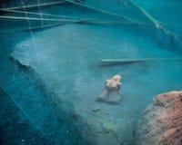 Blausee, die Schweiz - die Erststatue Lizenzfreie Stockfotos
