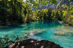Blausee parkerar den blåa sjönaturen i den tidiga nedgången Kandersteg Schweiz fotografering för bildbyråer
