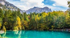 Blausee, Svizzera - fogliame di caduta Immagine Stock Libera da Diritti