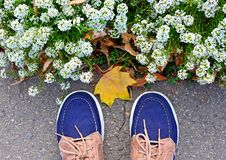 Blausport makasin Stand nahe einem Blumenbeet mit weißen Blumen, Schönheit und Mode, Blüte lizenzfreie stockbilder
