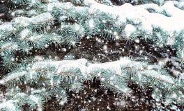 Blautanne bedeckt mit Schnee Abstraktes Hintergrundmuster der weißen Sterne auf dunkelroter Auslegung Stockfotos
