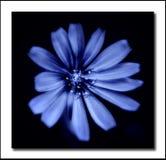 Blauw Royalty-vrije Stock Foto
