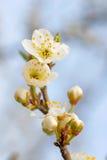 Blauw april stock foto