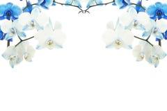 Blauw bloeiend orchideeënkader Stock Afbeeldingen