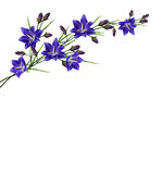 Blauw bloemenklokje Royalty-vrije Stock Foto's