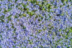 Blauw bloemenpatroon Stock Fotografie