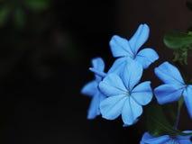 Blauw bloemgrafiet Stock Foto