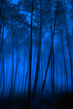 Blauw bos Stock Foto