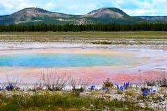 Blauw de Geiserbassin van het Yellowstone Nationaal Park Stock Fotografie
