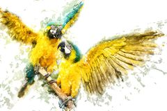 Blauw-en-gele Ara's Royalty-vrije Stock Afbeeldingen