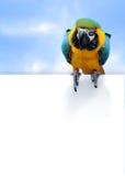Blauw-en-gele ararauna van de Aronskelken van de Ara Stock Afbeelding