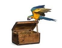 Blauw-en-gouden die Ara op wit wordt geïsoleerd Stock Foto's