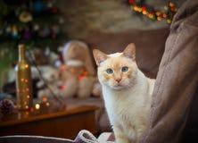 Blauw-eyed kat op Kerstmisachtergrond Stock Afbeelding