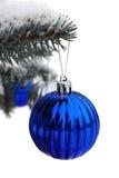 Blauw gebied op een blauwe bont-boom die op wit wordt geïsoleerdd Stock Foto's