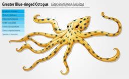 Blauw-geringde octopus Stock Fotografie