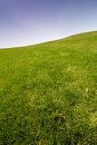 Blauw hemel en gras Stock Afbeeldingen