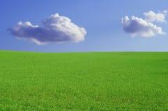 Blauw hemel groen gras Stock Foto