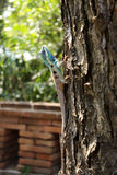 Blauw kameleon op boom Royalty-vrije Stock Foto's