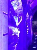 Blauw licht standbeeld stock afbeelding