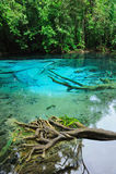 Blauw Meer in Diep Bos Stock Foto's