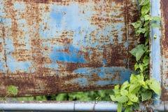 Blauw metaal met groene bladeren stock foto