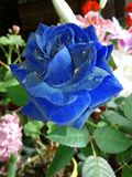 Blauw nam toe Stock Fotografie