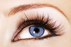 Blauw oog Stock Fotografie