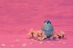 Blauw Paasei met abrikozentakje en bloemblaadjes op roze  Stock Foto