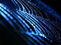 Blauw spinneweb stock foto