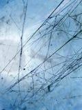 Blauw spinneweb Stock Afbeeldingen