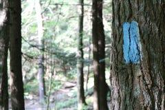 Blauw Trail Blaze Royalty-vrije Stock Foto