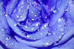 Blauw van de close-up nam toe royalty-vrije stock foto's