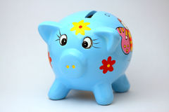 Blauw varkensvlees Stock Foto