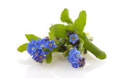Blauw Vergeet-mij-nietje Stock Foto's