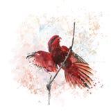Blauw-weggeschoten Lory Parrot-waterverf Royalty-vrije Stock Afbeeldingen