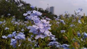 Blauwachtige bloemen Royalty-vrije Stock Fotografie