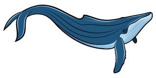 Blauwal stockbild