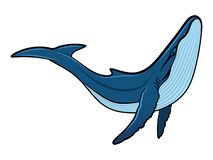 Blauwal lizenzfreies stockbild