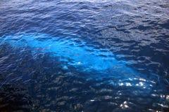 Blauwal unter Wasser Lizenzfreie Stockbilder
