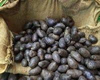 Blauwe Aardappels Royalty-vrije Stock Foto's