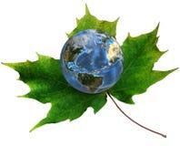 Blauwe Aarde op groen esdoornblad Royalty-vrije Stock Fotografie